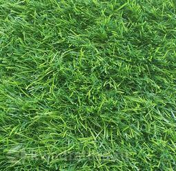 Искусственная трава ландшафтная Pretty Grass 35